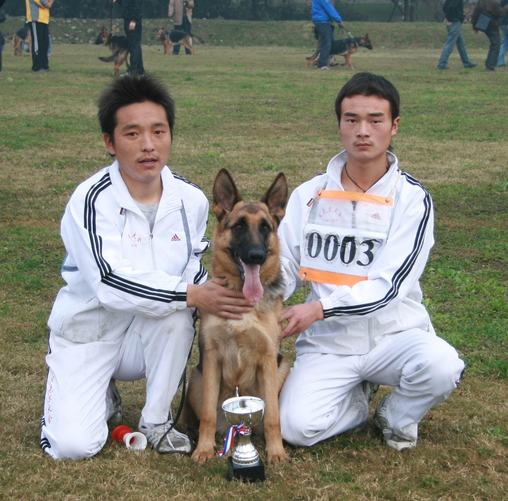 CSV德国牧羊犬俱乐部08年四川 成都 地方展成绩图片