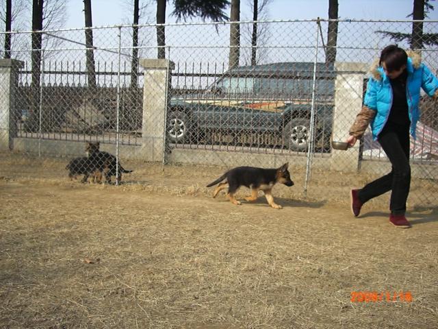 帅哥.美女;va6;80天的小狗最新生活照图片