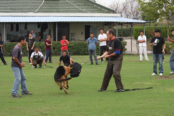 2009年CSV德国牧羊犬俱乐部假想敌培训图片