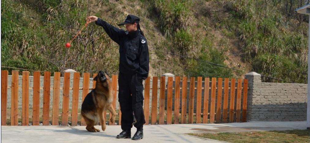 CSV福建德国牧羊犬俱乐部图片