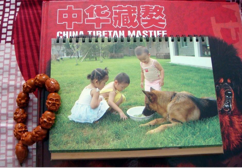 流金岁月之csv德国牧羊犬俱乐部的第一本挂历图片