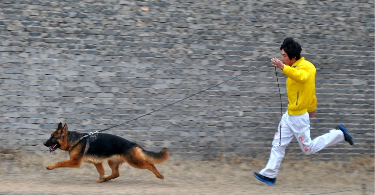 CSV德国牧羊犬俱乐部指导手 冯晓武图片